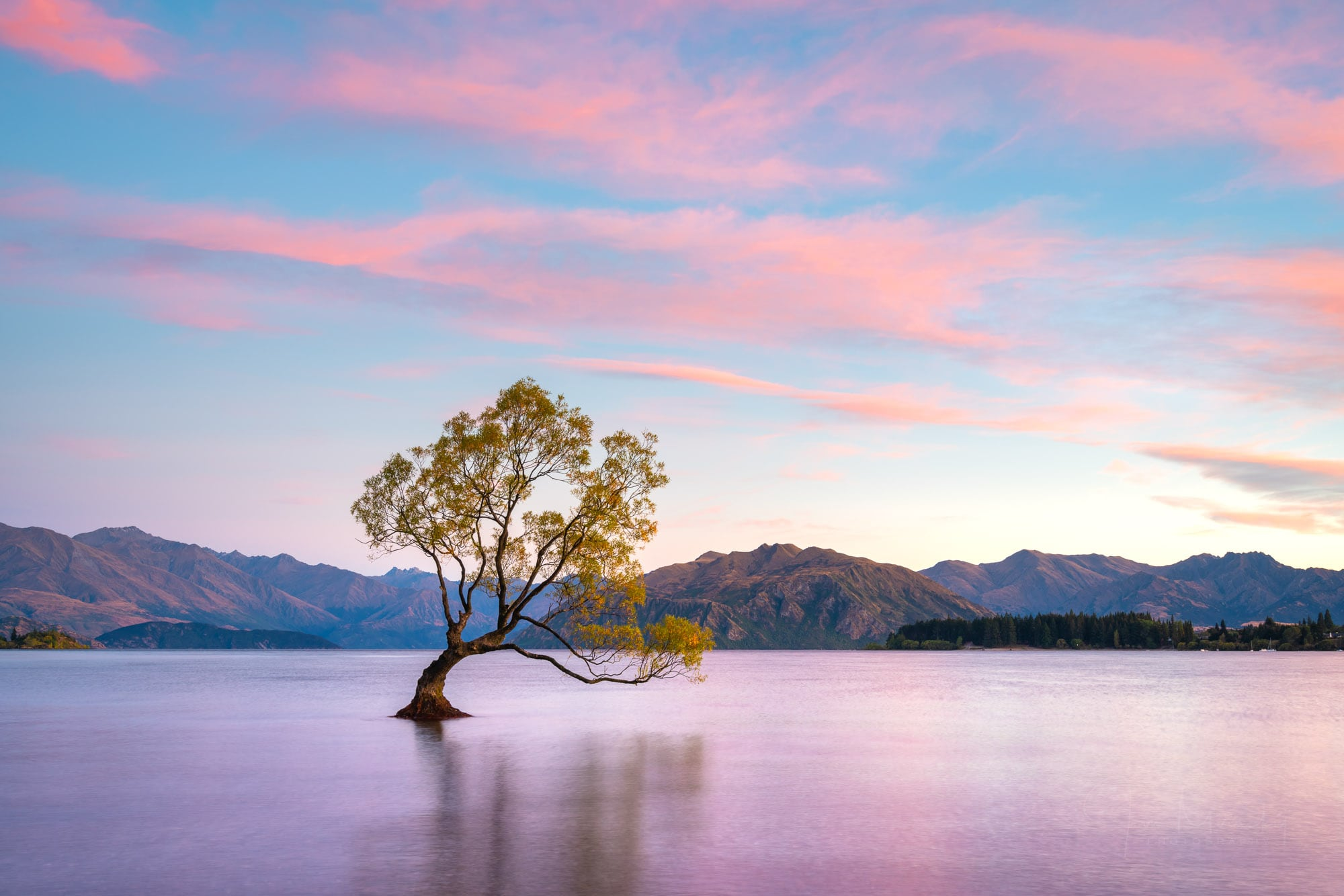 Wanaka Tree at sunrise, New Zealand