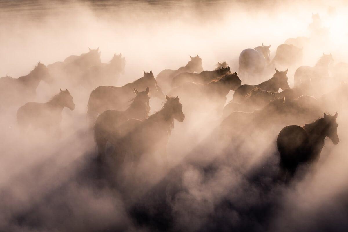 Herd of horses in Cappadocia, Turkey